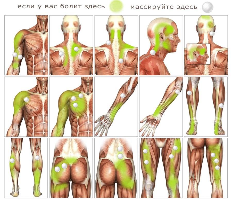 Миофасциальный массаж - что это такое, обучение, как делать массаж лица, тела, спины. Фото, видео-уроки Шубиной