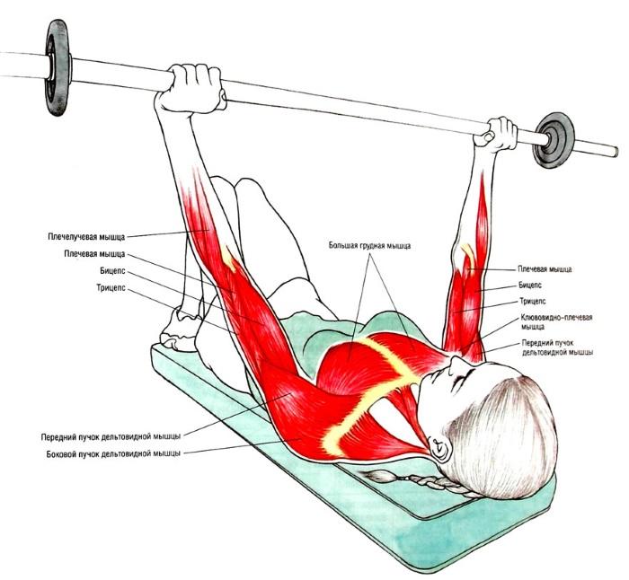 Базовые упражнения для женщин на грудные мышцы с гантелями, штангой, гирей, эспандером, на массу с собственным весом
