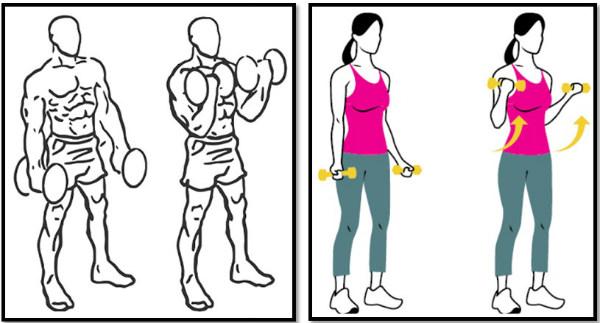 Упражнения с гантелями в домашних условиях. Программа тренировок для женщин и мужчин: накачка рук, мышц тела, набор массы