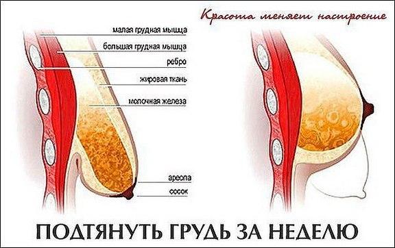 Как накачать грудные мышцы в домашних условиях девушке гантелями, отжиманиями, на турнике. Программа тренировок на неделю, месяц