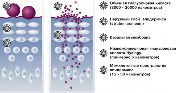 Мезовартон для биоревитализации лица. Состав препарата, производитель, последствия, отзывы косметологов и цена