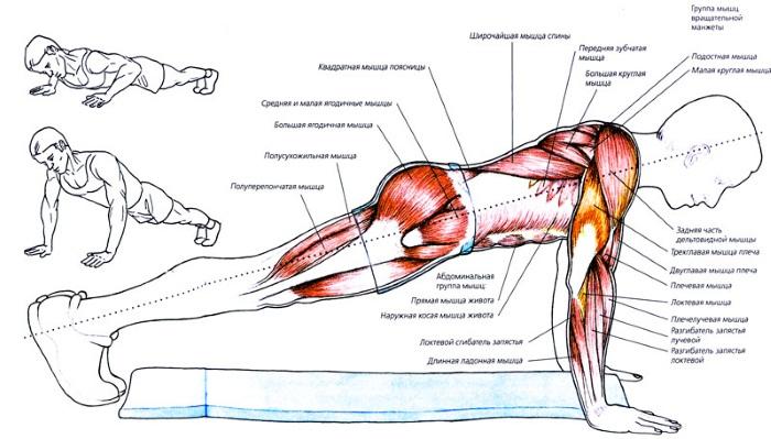 Отжимания от пола: какие мышцы качаются у мужчин, женщин. Техника выполнения, программа для начинающих, виды отжиманий