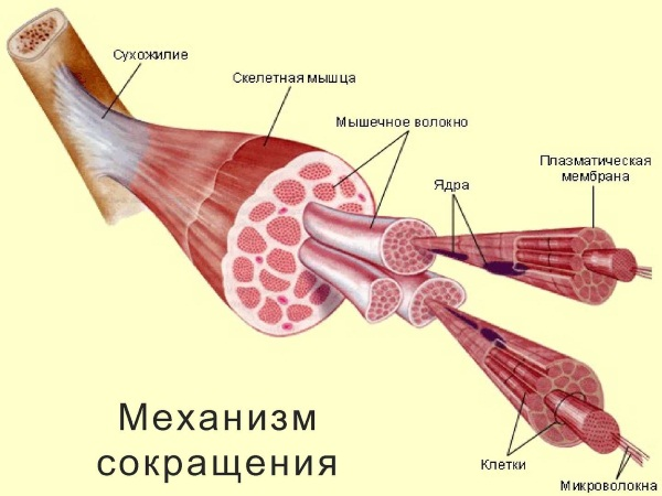 Обезболивающие мази при боли в мышцах