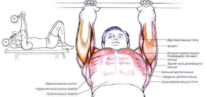 Упражнения на трицепс с гантелями для женщин. Комплекс для начинающих в домашних условиях и тренажерном зале