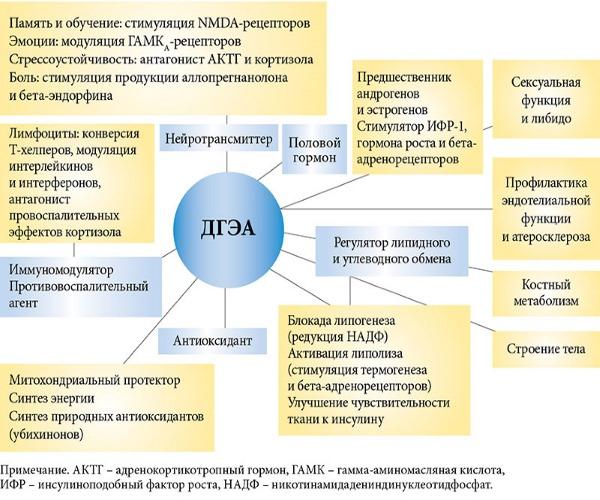 DHEA. Инструкция по применению. Что это такое для женщин, мужчин. S гормон при низком, повышенном АМГ. Где купить, цена в аптеке