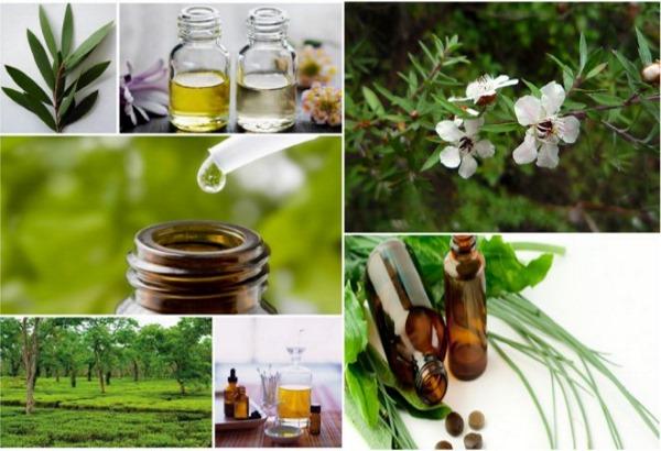 Эфирное масло чайного дерева от прыщей, рубцов, пятеgo-dereva-ot-pryschey-rubtsov-pyaten-shramov-na-litse-svoystva-i-pн, шрамов на лице. Свойства и применение