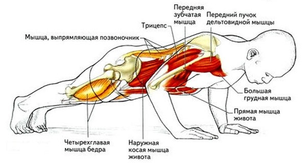 Программа отжиманий от пола для начинающих. Таблица для набора мышечной массы, похудения, накачки грудных мышц, на все мышцы тела