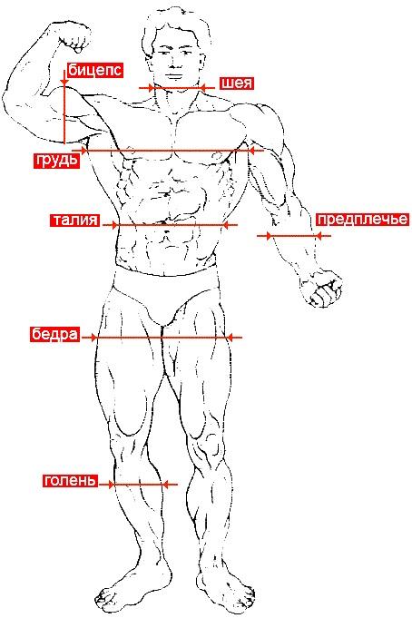 Шейпинг занятия для похудения в домашних условиях. Видео-уроки фитнеса, упражнения для начинающих, программа тренировок