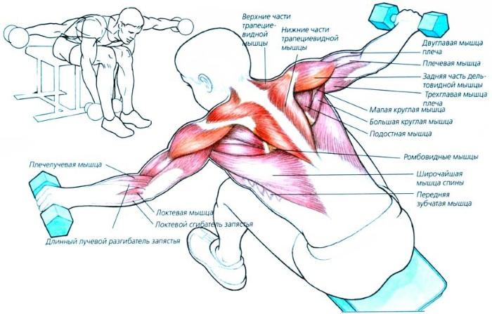 Упражнения на руки для девушек в домашних условиях. Тренировки с гантелями и без, собственным весом для бицепса, трицепса. Как накачать мышцы