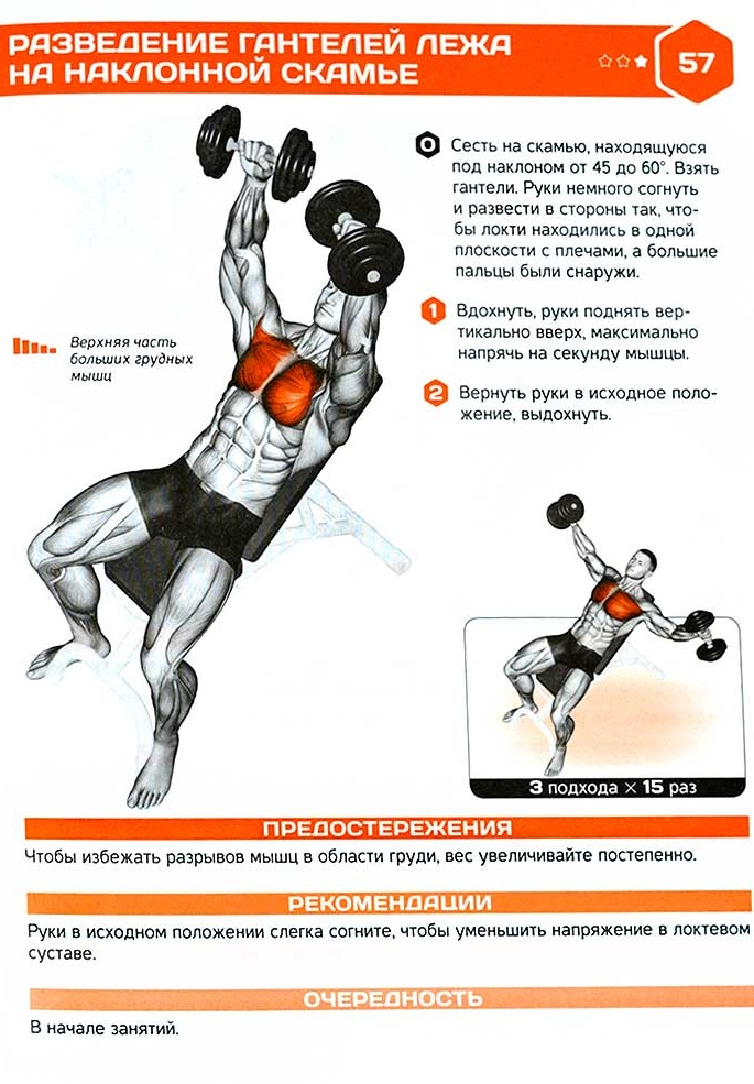 Упражнения с гантелями для спины. Программа тренировок для подтягивания мышц, при грыже позвоночника, сколиозе, остеохондрозе