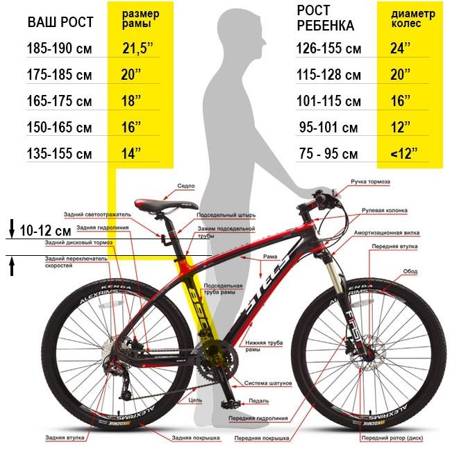 Езда на велосипеде. Польза и вред для мужчин и женщин. Нормы, сколько нужно ездить