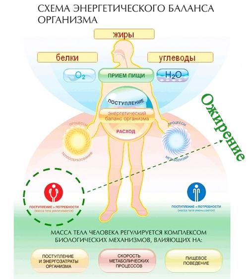 Препараты для ускорения метаболизма обмена веществ, чтобы похудеть