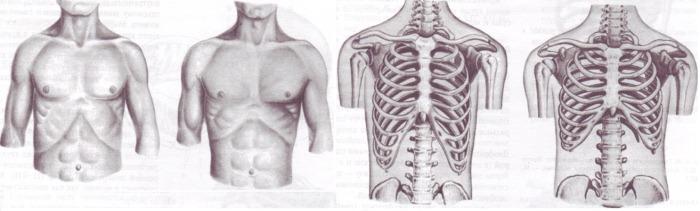 Пластическая операция по удалению ребер. Фото до и после, последствия