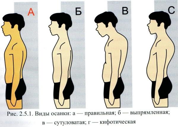 Упражнения для прямой осанки в тренажерном зале и домашних условиях