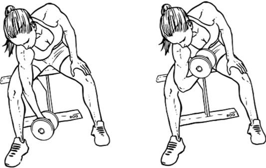 Упражнения на бицепс с гантелями и без, на турнике, со штангой для девушек. Программа в домашних условиях