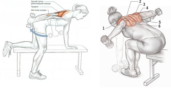 Упражнения на задние дельты плеч для девушек с гантелями, штангой, в тренажерном зале