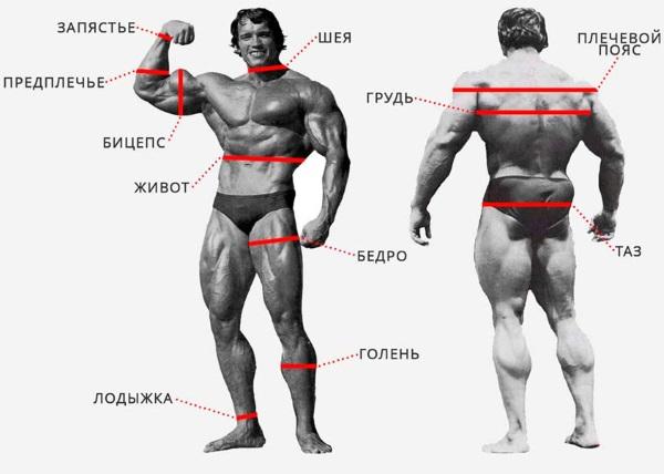 Оптимальный вес для женщины. Норма по росту и возрасту, индекс массы тела, формула расчета