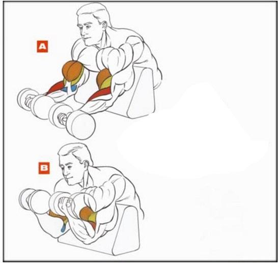 Скамья Скотта для бицепса. Упражнения, техника с гантелями, штангой