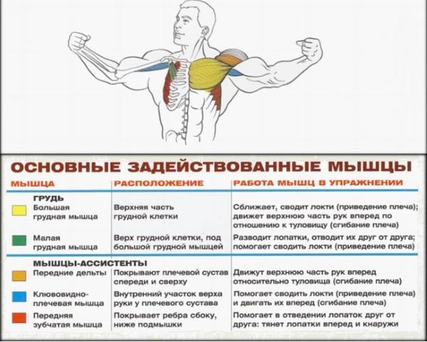 Упражнение бабочка для грудных мышц. Техника выполнения в тренажере, в домашних условиях