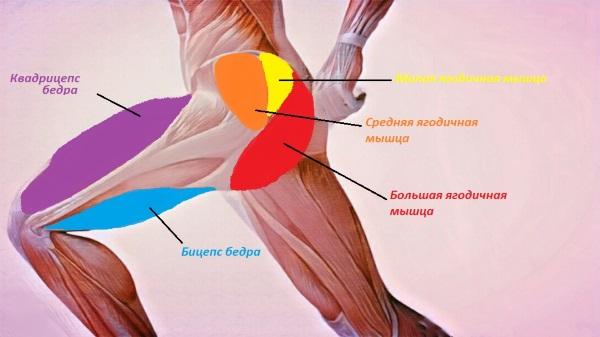 Упражнения на среднюю ягодичную мышцу в домашних условиях, зале для женщин с гантелями, на тренажере