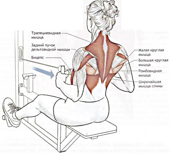 Упражнения в кроссовере для спины девушек, грудных мышц, ягодиц